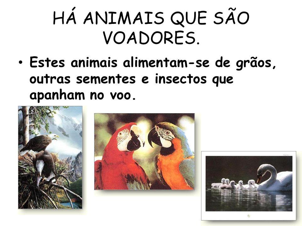 HÁ ANIMAIS QUE SÃO VOADORES. Estes animais alimentam-se de grãos, outras sementes e insectos que apanham no voo.
