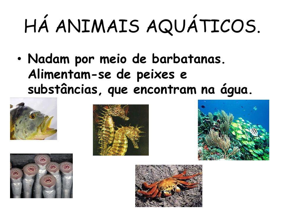 HÁ ANIMAIS AQUÁTICOS. Nadam por meio de barbatanas. Alimentam-se de peixes e substâncias, que encontram na água.