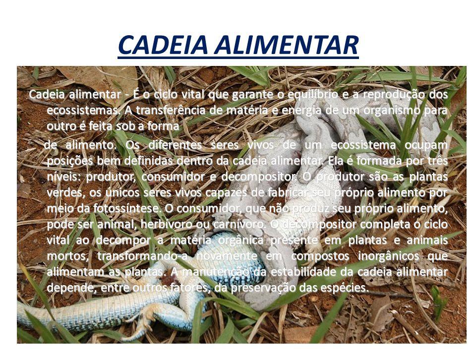 CADEIA ALIMENTAR Cadeia alimentar - É o ciclo vital que garante o equilíbrio e a reprodução dos ecossistemas. A transferência de matéria e energia de