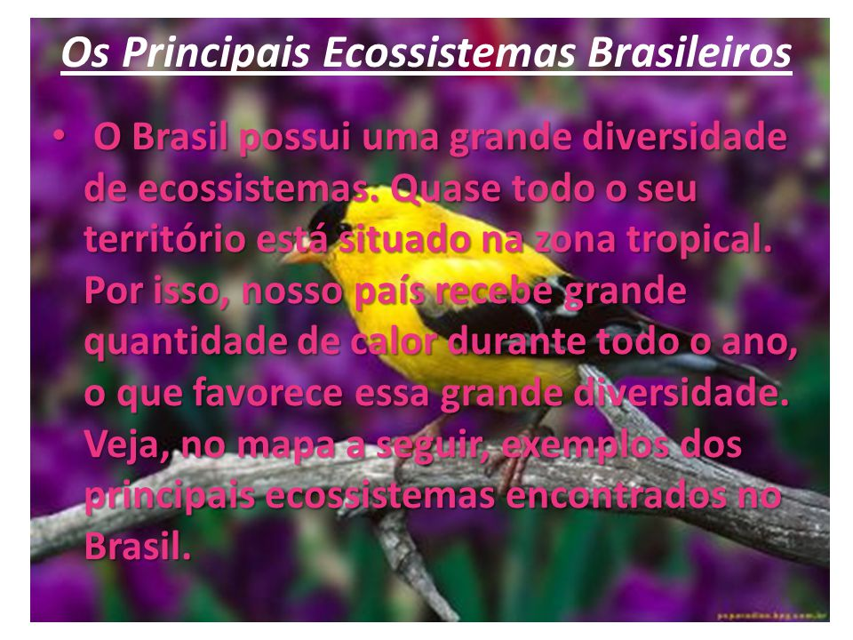 Os Principais Ecossistemas Brasileiros O Brasil possui uma grande diversidade de ecossistemas. Quase todo o seu território está situado na zona tropic