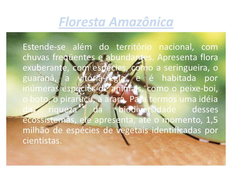 Floresta Amazônica Estende-se além do território nacional, com chuvas freqüentes e abundantes. Apresenta flora exuberante, com espécies, como a sering