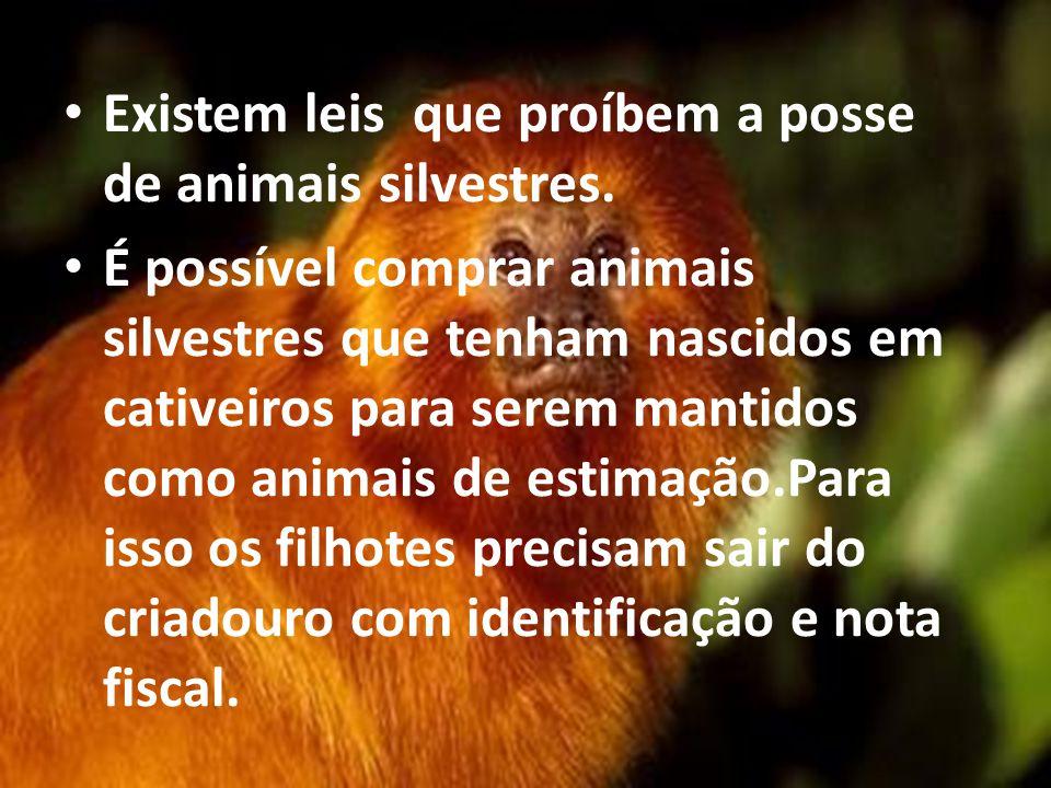 Existem leis que proíbem a posse de animais silvestres. É possível comprar animais silvestres que tenham nascidos em cativeiros para serem mantidos co