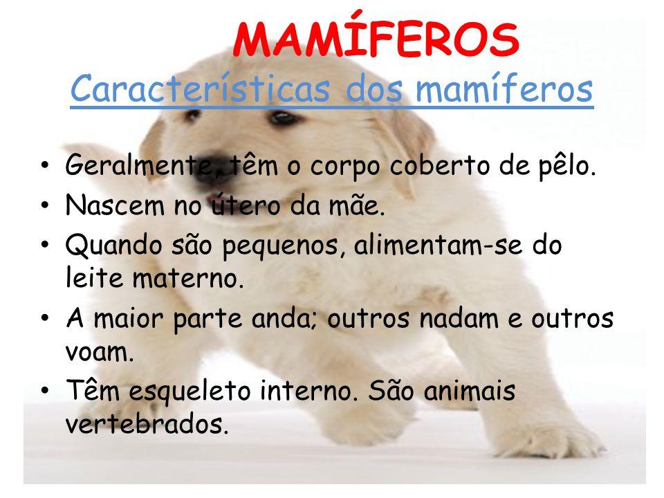 OS MAMÍFEROS Características dos mamíferos Geralmente, têm o corpo coberto de pêlo. Nascem no útero da mãe. Quando são pequenos, alimentam-se do leite