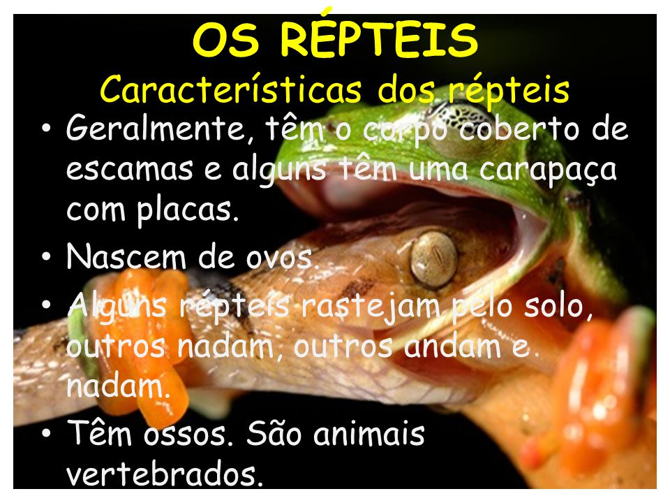 OS RÉPTEIS Características dos répteis Geralmente, têm o corpo coberto de escamas e alguns têm uma carapaça com placas. Nascem de ovos. Alguns répteis