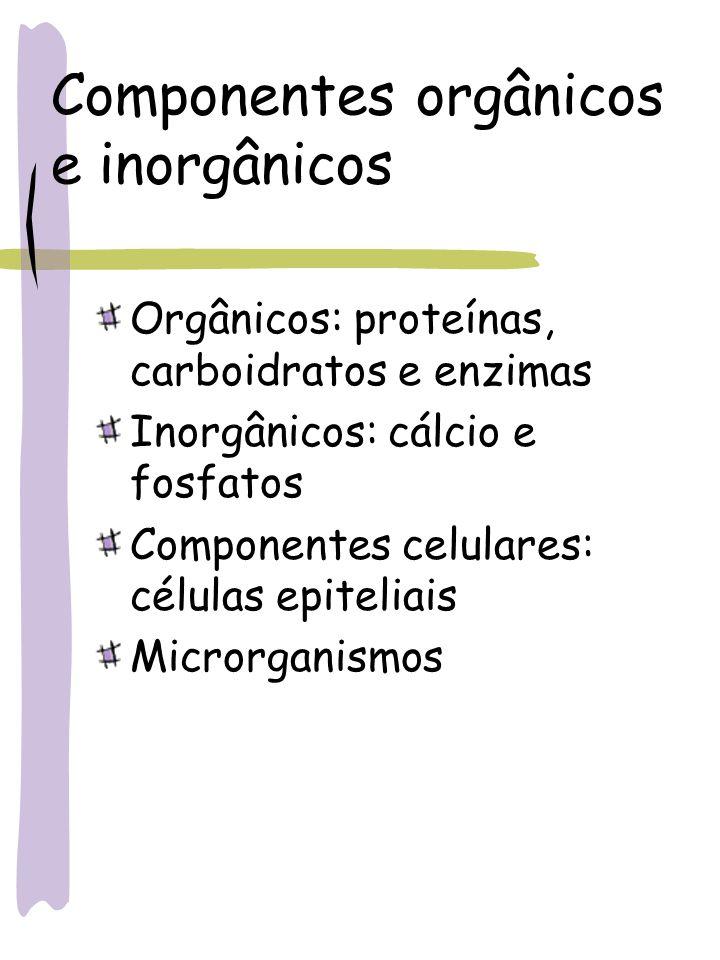 Componentes orgânicos e inorgânicos Orgânicos: proteínas, carboidratos e enzimas Inorgânicos: cálcio e fosfatos Componentes celulares: células epiteli
