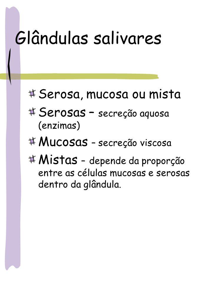 Glândulas salivares Serosa, mucosa ou mista Serosas – secreção aquosa (enzimas) Mucosas – secreção viscosa Mistas – depende da proporção entre as célu
