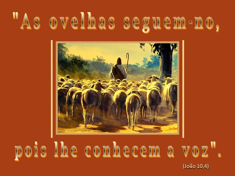 O Bom Pastor se inquieta por causa do seu rebanho e vai chamando todos para segui-Lo...