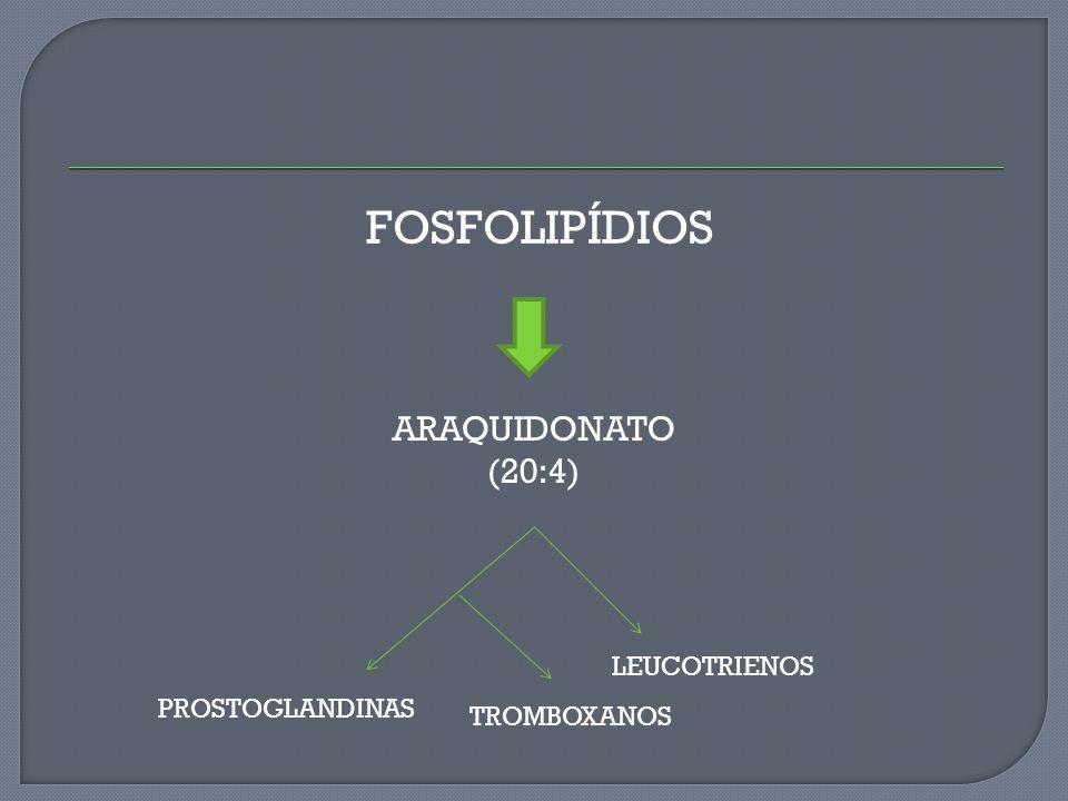 FOSFOLIPÍDIOS ARAQUIDONATO (20:4) LEUCOTRIENOS TROMBOXANOS PROSTOGLANDINAS