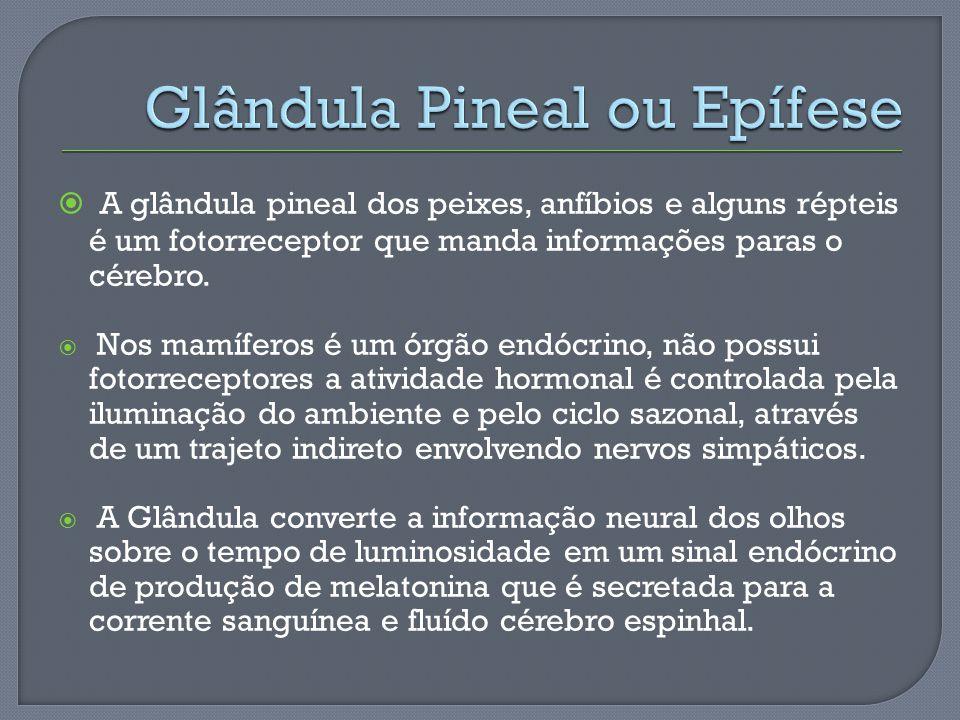 A glândula pineal dos peixes, anfíbios e alguns répteis é um fotorreceptor que manda informações paras o cérebro. Nos mamíferos é um órgão endócrino,