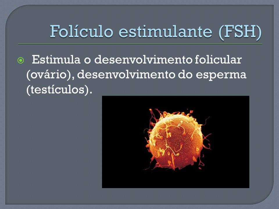Estimula o desenvolvimento folicular (ovário), desenvolvimento do esperma (testículos).