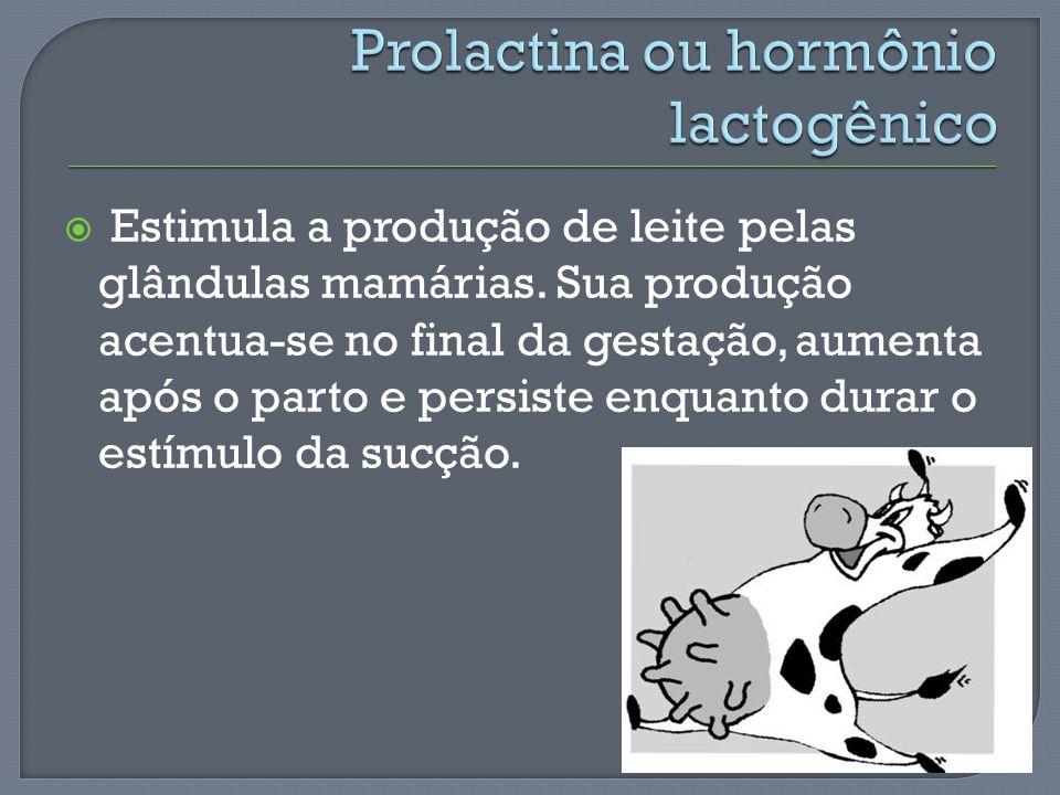 Estimula a produção de leite pelas glândulas mamárias. Sua produção acentua-se no final da gestação, aumenta após o parto e persiste enquanto durar o