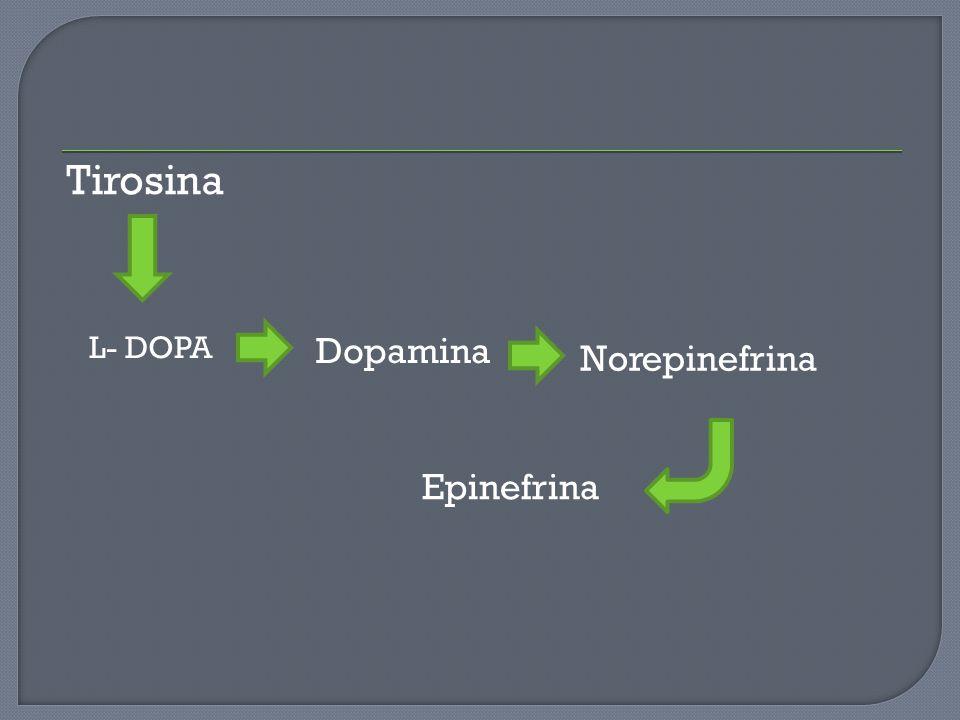 Tirosina L- DOPA Dopamina Norepinefrina Epinefrina