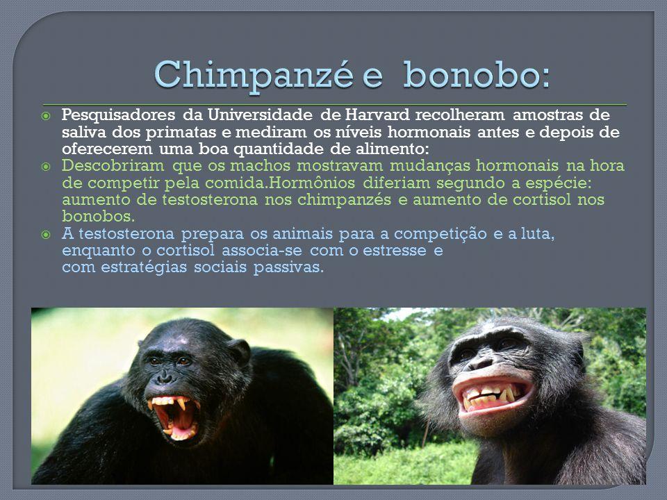 Pesquisadores da Universidade de Harvard recolheram amostras de saliva dos primatas e mediram os níveis hormonais antes e depois de oferecerem uma boa