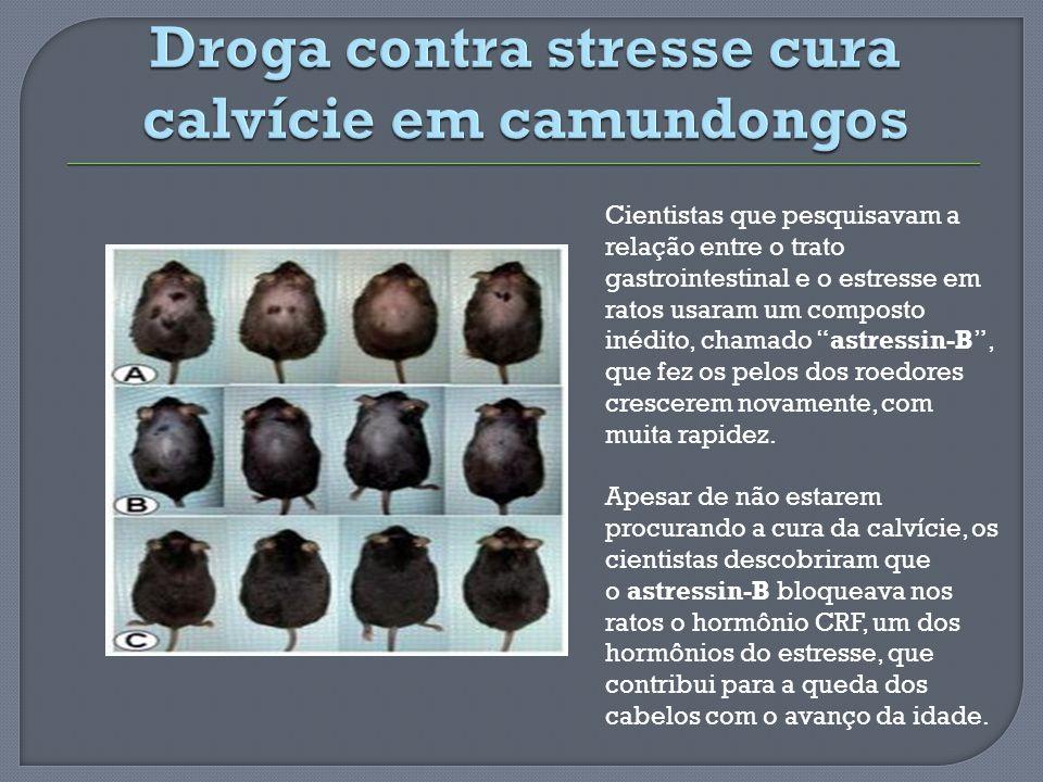 Cientistas que pesquisavam a relação entre o trato gastrointestinal e o estresse em ratos usaram um composto inédito, chamado astressin-B, que fez os