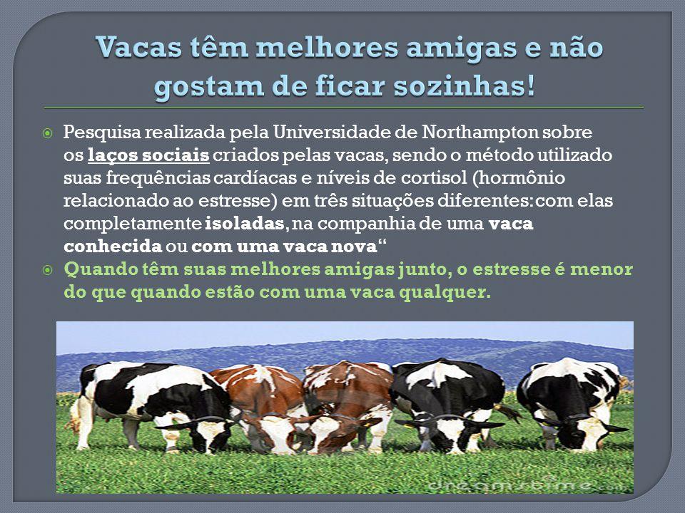 Pesquisa realizada pela Universidade de Northampton sobre os laços sociais criados pelas vacas, sendo o método utilizado suas frequências cardíacas e