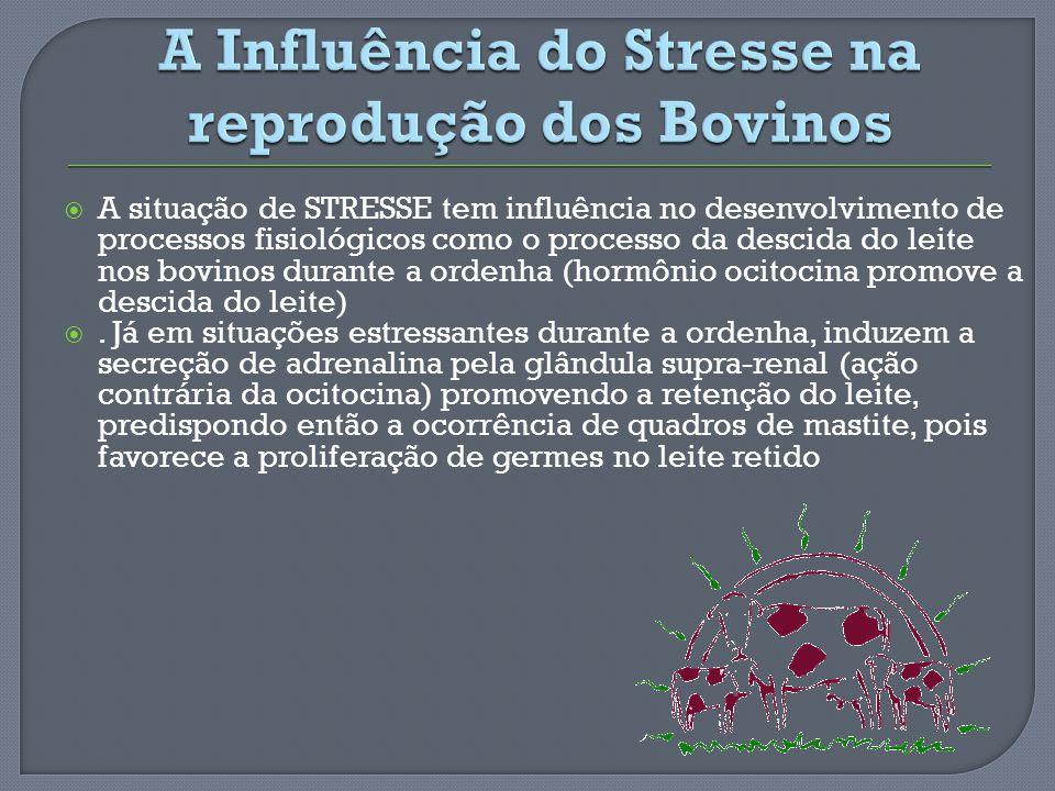 A situação de STRESSE tem influência no desenvolvimento de processos fisiológicos como o processo da descida do leite nos bovinos durante a ordenha (h