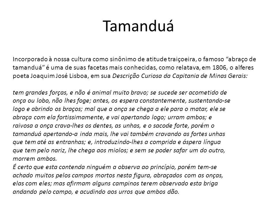 Incorporado à nossa cultura como sinônimo de atitude traiçoeira, o famoso abraço de tamanduá é uma de suas facetas mais conhecidas, como relatava, em