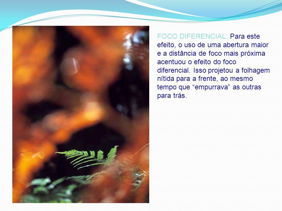 FOCO DIFERENCIAL: Para este efeito, o uso de uma abertura maior e a distância de foco mais próxima acentuou o efeito do foco diferencial.