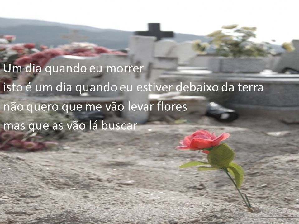 Um dia quando eu morrer isto é um dia quando eu estiver debaixo da terra não quero que me vão levar flores mas que as vão lá buscar