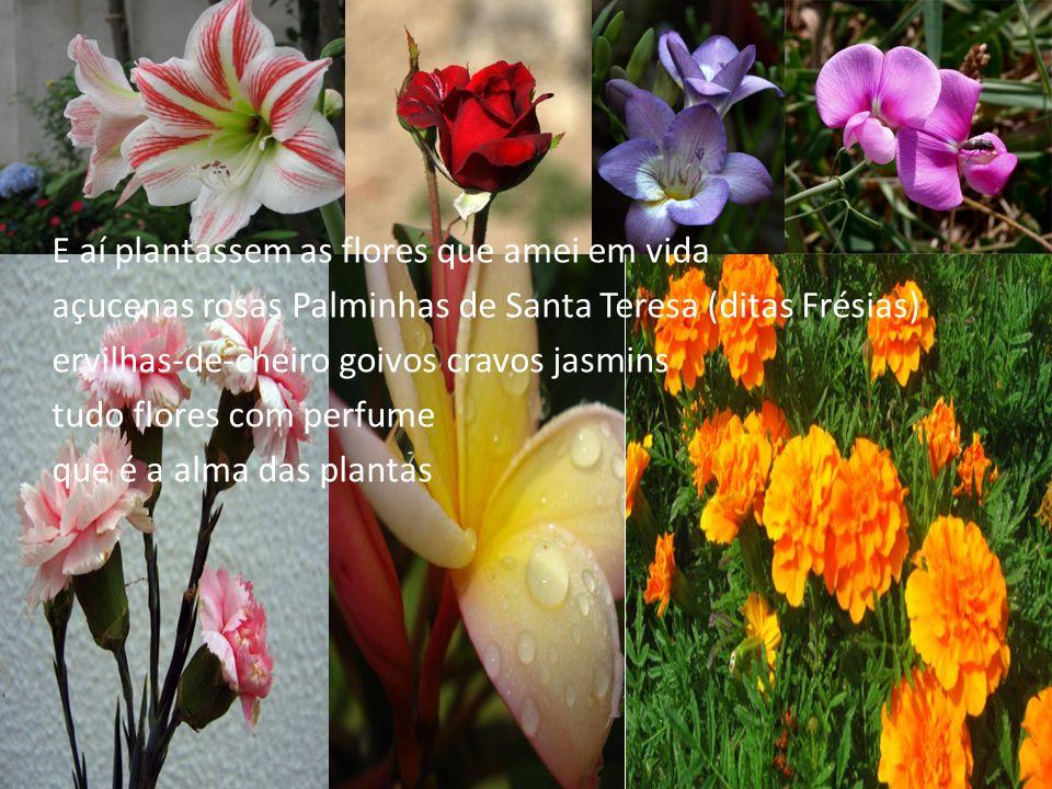E aí plantassem as flores que amei em vida açucenas rosas Palminhas de Santa Teresa (ditas Frésias) ervilhas-de-cheiro goivos cravos jasmins tudo flor