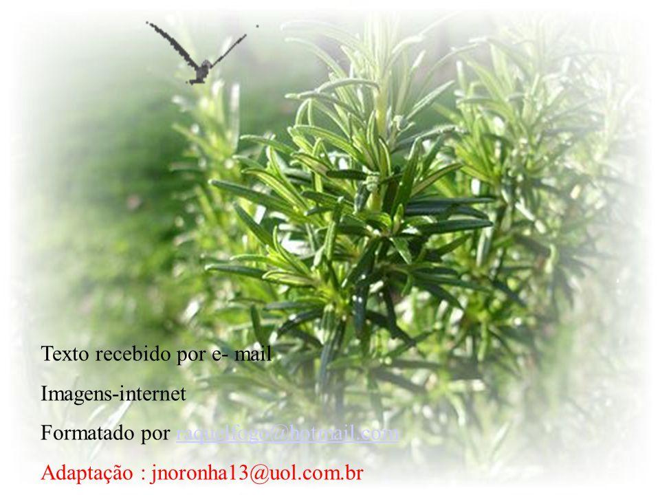 Eu abençôo folha, caule e flor, que a partir deste instante terão aroma de santidade e emanarão alegria. Bom chá de alecrim pra você!!.