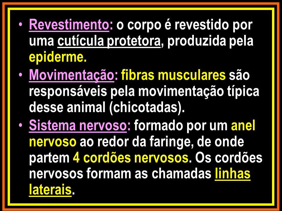 Revestimento: o corpo é revestido por uma cutícula protetora, produzida pela epiderme. Movimentação: fibras musculares são responsáveis pela movimenta