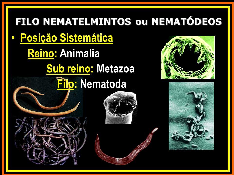 FILO NEMATELMINTOS ou NEMATÓDEOS Posição Sistemática Reino: Animalia Sub reino: Metazoa Filo: Nematoda
