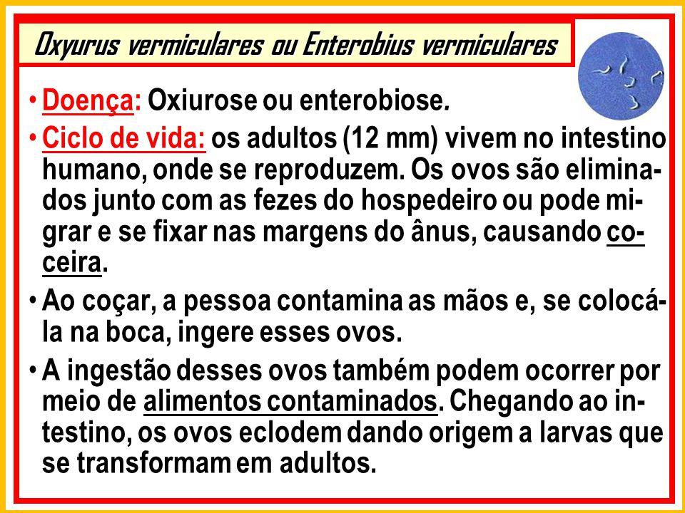 Oxyurus vermiculares ou Enterobius vermiculares Doença: Oxiurose ou enterobiose. Ciclo de vida: os adultos (12 mm) vivem no intestino humano, onde se