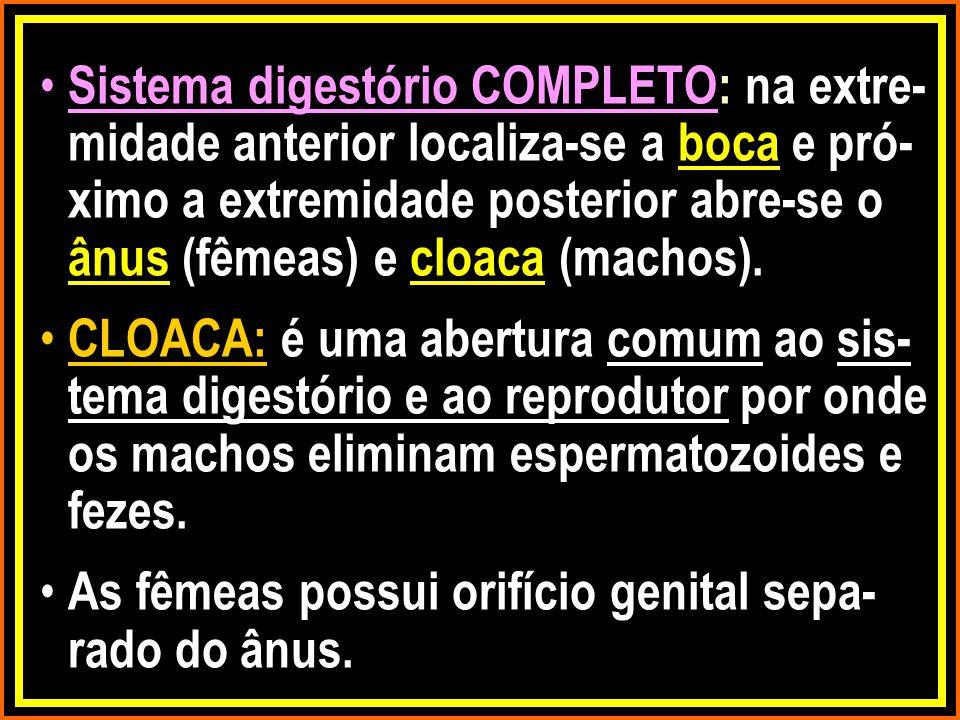 Sistema digestório COMPLETO: na extre- midade anterior localiza-se a boca e pró- ximo a extremidade posterior abre-se o ânus (fêmeas) e cloaca (machos