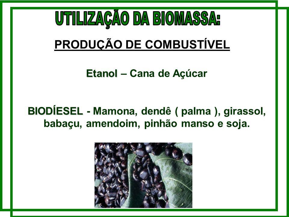 Etanol Etanol – Cana de Açúcar BIODÍESEL BIODÍESEL - Mamona, dendê ( palma ), girassol, babaçu, amendoim, pinhão manso e soja.