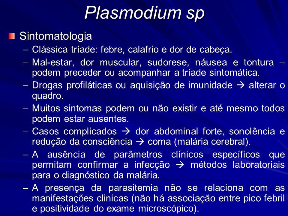 Plasmodium sp Sintomatologia – –Clássica tríade: febre, calafrio e dor de cabeça. – –Mal-estar, dor muscular, sudorese, náusea e tontura – podem prece