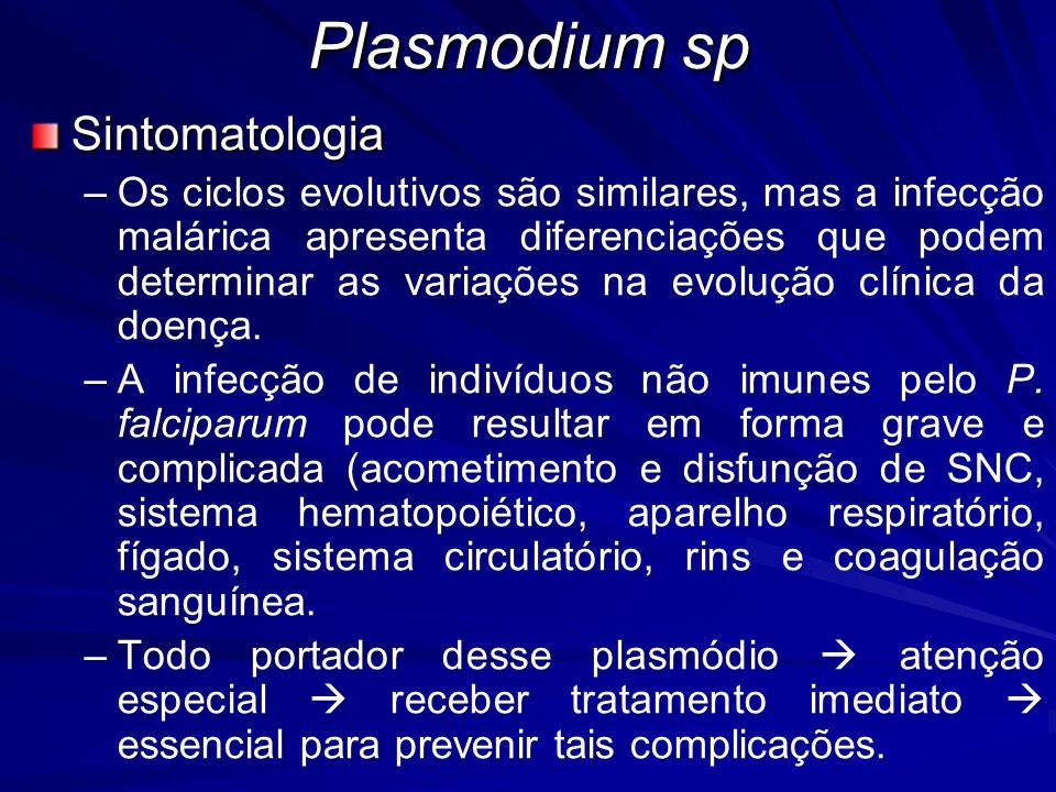 Plasmodium sp Sintomatologia – –Os ciclos evolutivos são similares, mas a infecção malárica apresenta diferenciações que podem determinar as variações