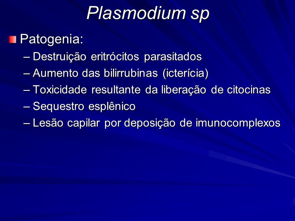 Plasmodium sp Patogenia: –Destruição eritrócitos parasitados –Aumento das bilirrubinas (icterícia) –Toxicidade resultante da liberação de citocinas –S