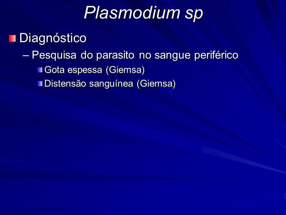 Plasmodium sp Diagnóstico –Pesquisa do parasito no sangue periférico Gota espessa (Giemsa) Distensão sanguínea (Giemsa)