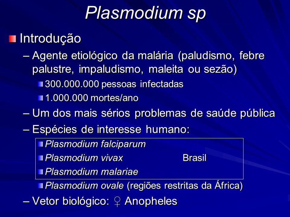Plasmodium sp Habitat –Depende da fase do ciclo Homem: fígado e hemácias Anopheles: estômago, intestino e glândulas salivares