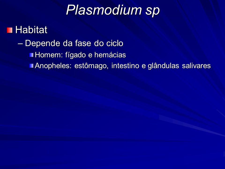 Plasmodium sp Morfologia –Depende do estágio de desenvolvimento –Formas extracelulares EsporozoítosMerozoítosOocineto –Formas intracelulares TrofozoítosEsquizontesGametócitos