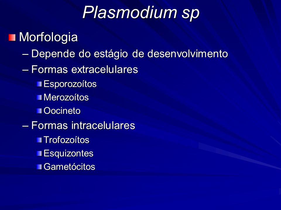 Plasmodium sp Morfologia –Depende do estágio de desenvolvimento –Formas extracelulares EsporozoítosMerozoítosOocineto –Formas intracelulares Trofozoít
