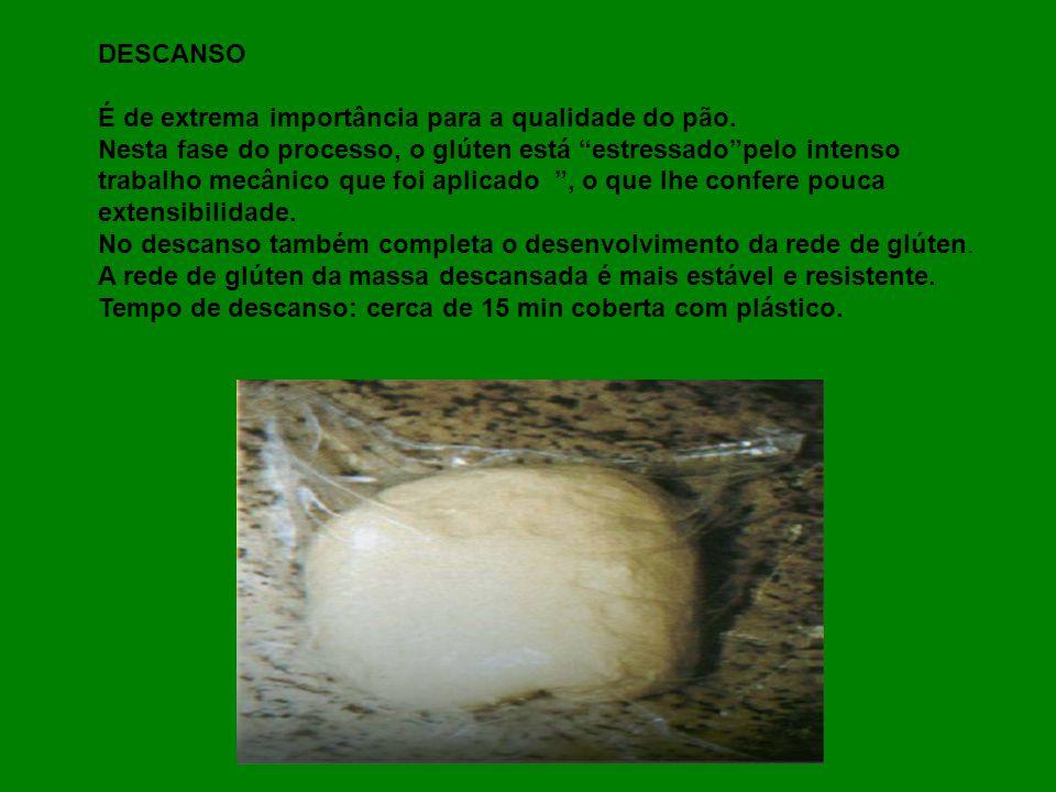 DESCANSO É de extrema importância para a qualidade do pão. Nesta fase do processo, o glúten está estressadopelo intenso trabalho mecânico que foi apli