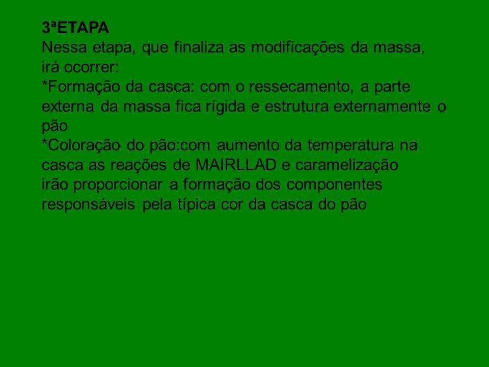 3ªETAPA Nessa etapa, que finaliza as modificações da massa, irá ocorrer: *Formação da casca: com o ressecamento, a parte externa da massa fica rígida