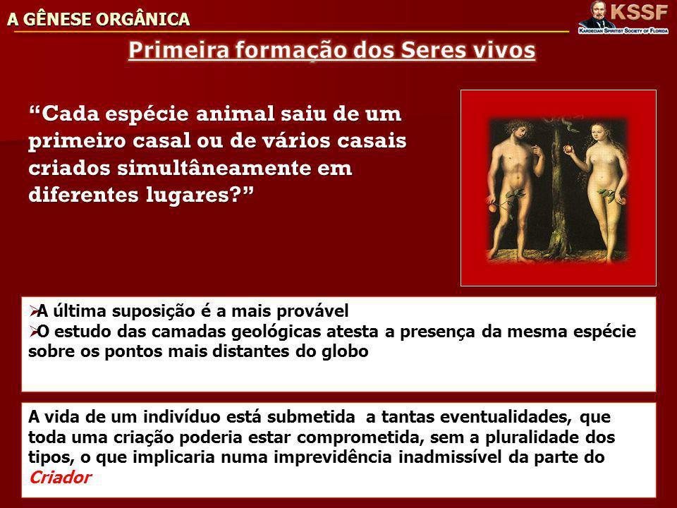 Cada espécie animal saiu de um primeiro casal ou de vários casais criados simultâneamente em diferentes lugares.
