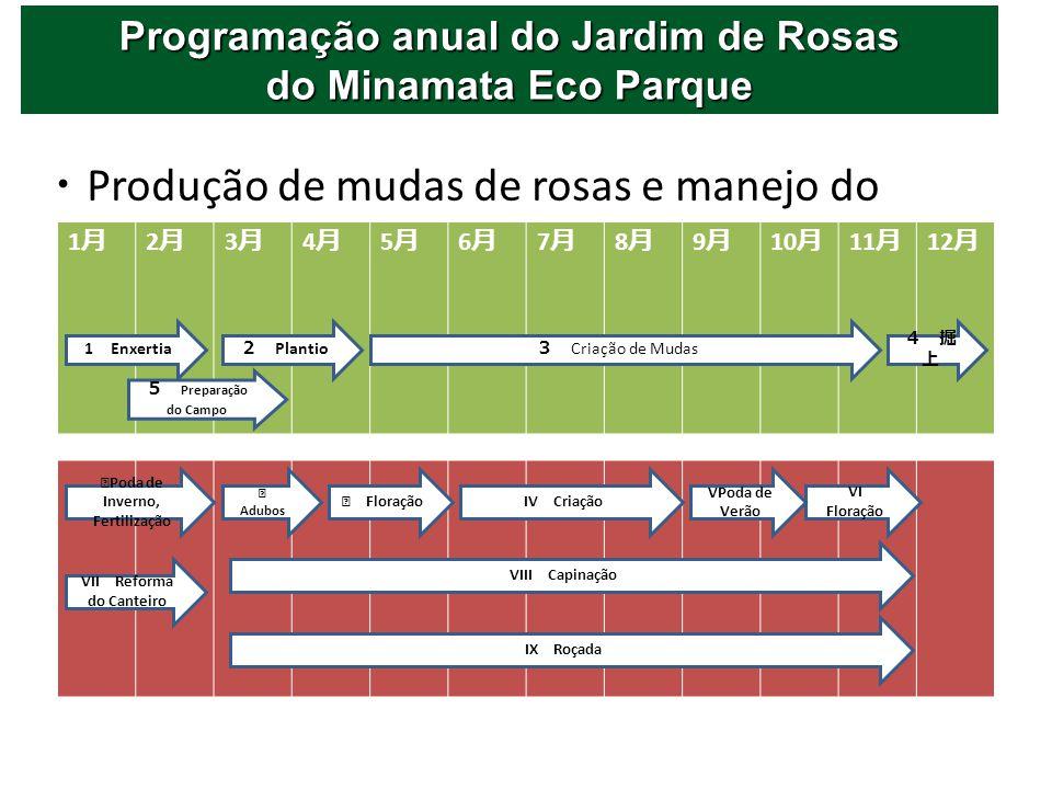 Produção de mudas de rosas e manejo do jardim 1 2 3 4 5 6 7 8 9 10 11 12 1 Enxertia Plantio Criação de Mudas Preparação do Campo Poda de Inverno, Fert
