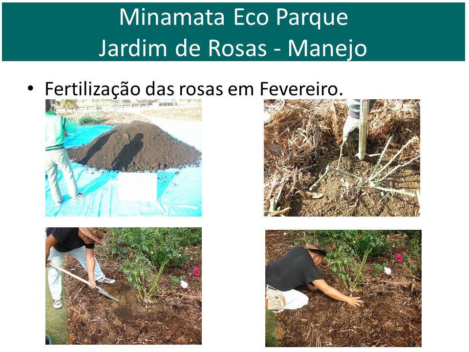 Fertilização das rosas em Fevereiro. Minamata Eco Parque Jardim de Rosas - Manejo