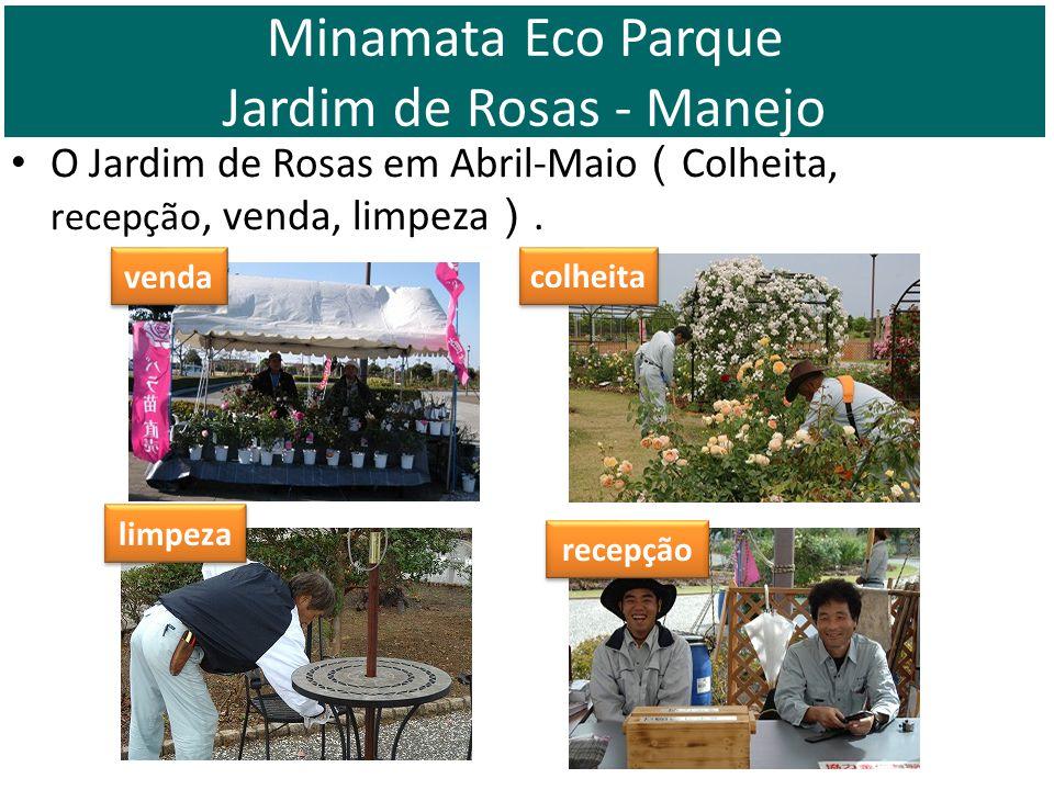 O Jardim de Rosas em Abril-Maio Colheita, recepção, venda, limpeza. venda recepção limpeza colheita Minamata Eco Parque Jardim de Rosas - Manejo