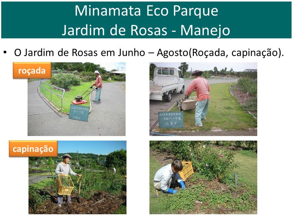 O Jardim de Rosas em Junho – Agosto(Roçada, capinação). roçada capinação Minamata Eco Parque Jardim de Rosas - Manejo
