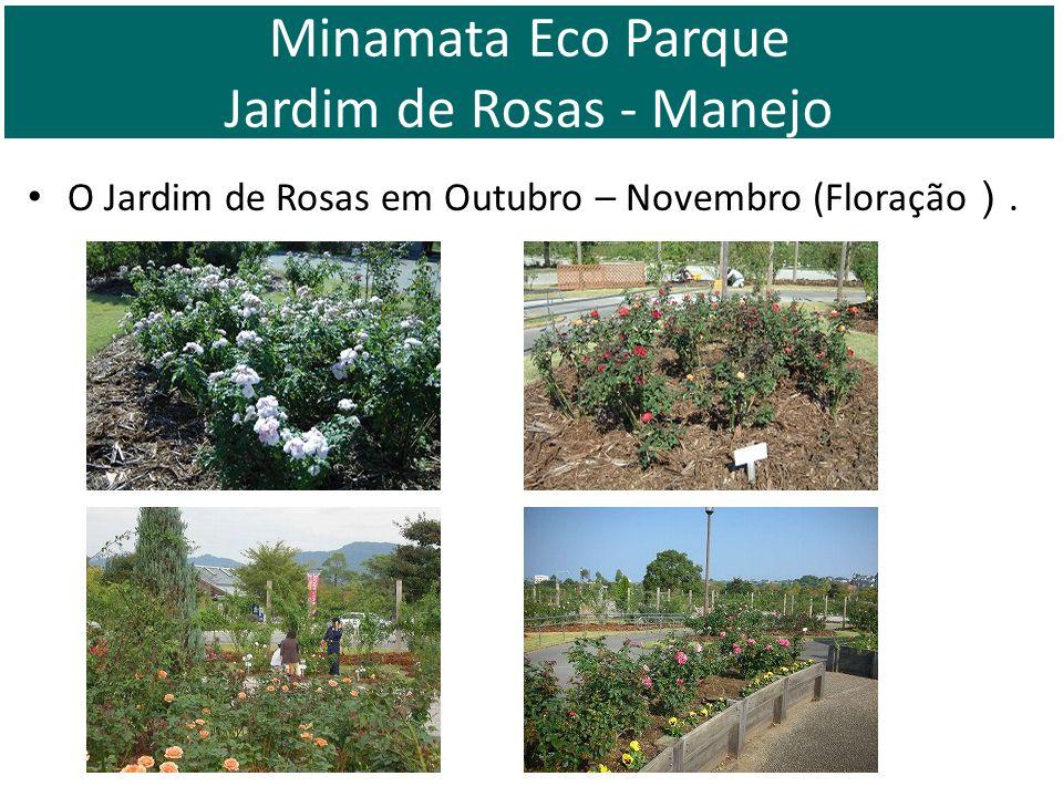 O Jardim de Rosas em Outubro – Novembro (Floração. Minamata Eco Parque Jardim de Rosas - Manejo