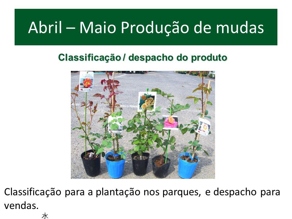Classificação para a plantação nos parques, e despacho para vendas. Abril – Maio Produção de mudas Classificação / despacho do produto