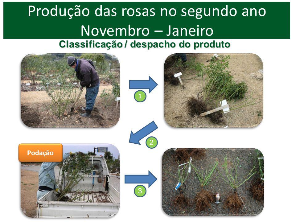 1 Podação Produção das rosas no segundo ano Novembro – Janeiro Classificação / despacho do produto