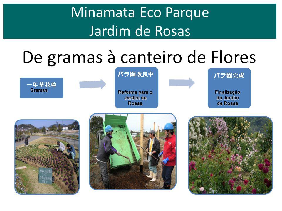De gramas à canteiro de Flores Minamata Eco Parque Jardim de Rosas Gramas Reforma para o Jardim de Rosas Finalização do Jardim de Rosas