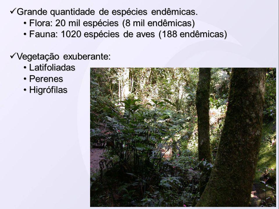 Grande quantidade de espécies endêmicas. Grande quantidade de espécies endêmicas. Flora: 20 mil espécies (8 mil endêmicas) Flora: 20 mil espécies (8 m