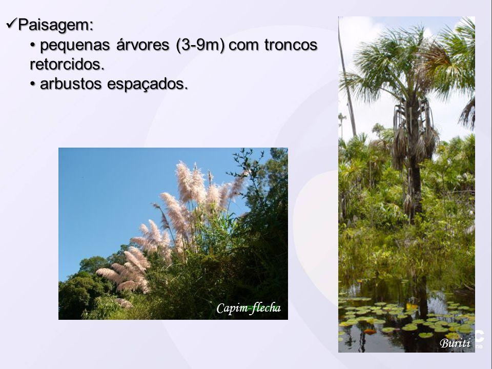 Paisagem: Paisagem: pequenas árvores (3-9m) com troncos retorcidos.